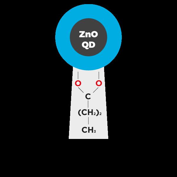 Zinc Oxide Quantum Dots (ZnO QDs) butyrate ligands